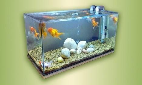 একুরিয়ামে মাছ পালনের মাধ্যমে আয়